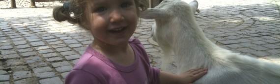 Gyereknap az állatkertben